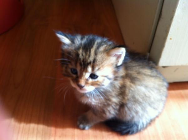 kitten-mittens-4-weken