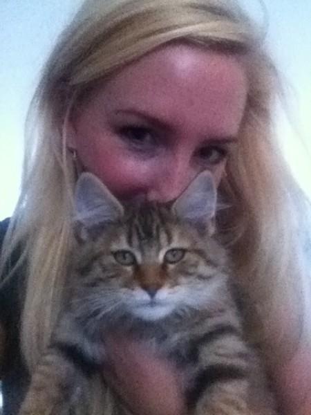 kitten mittens 12 weken