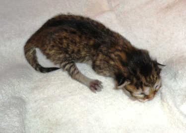 kitten-2-050820131